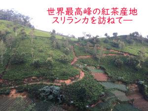 スリランカの紅茶畑