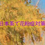 日本茶で花粉症対策