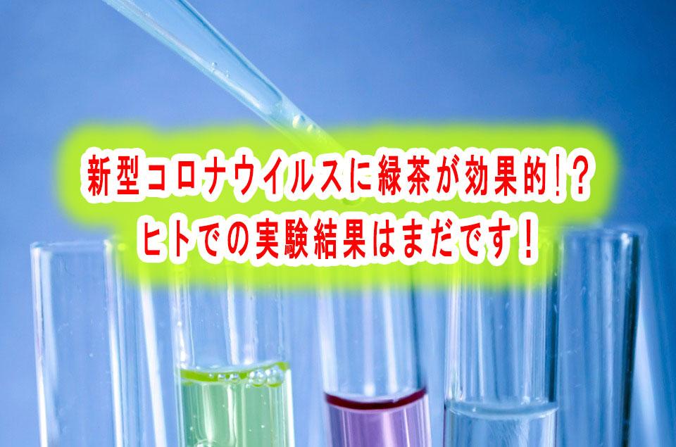 新型コロナウイルスに緑茶が効果的!?ヒトでの実験結果はまだです!